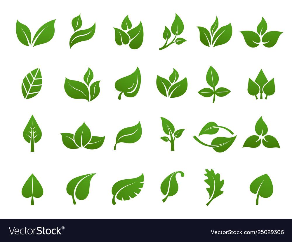 Green leaves logo plant nature eco garden