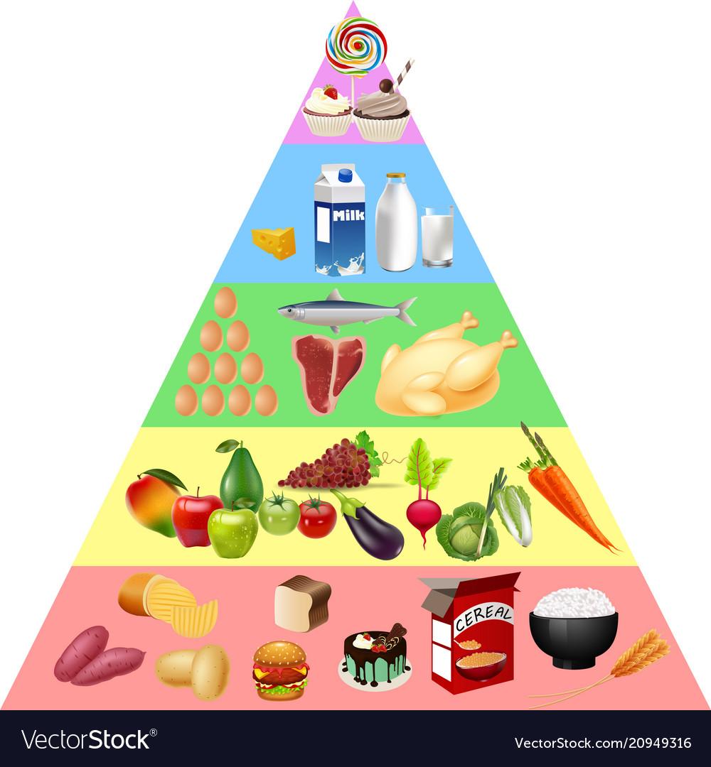 food pyramid chart royalty free vector image vectorstock