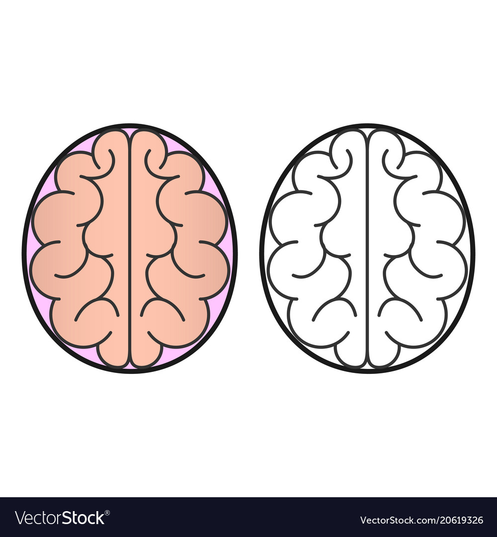 Human brain view from the top of the icon or