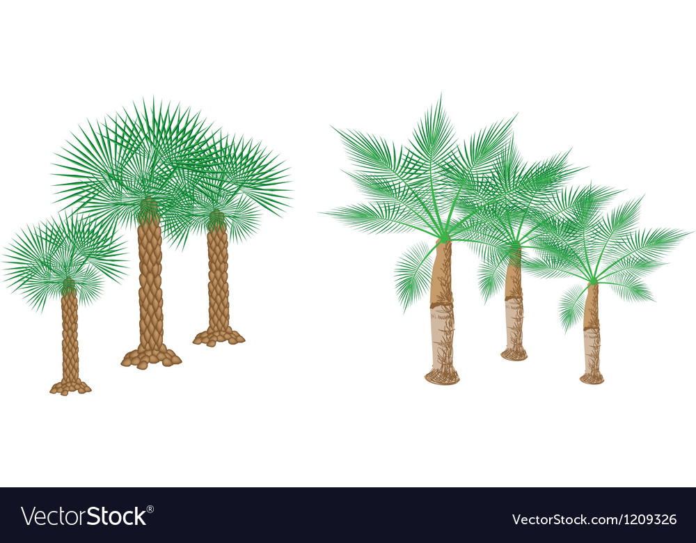 Isometric Palm Trees vector image