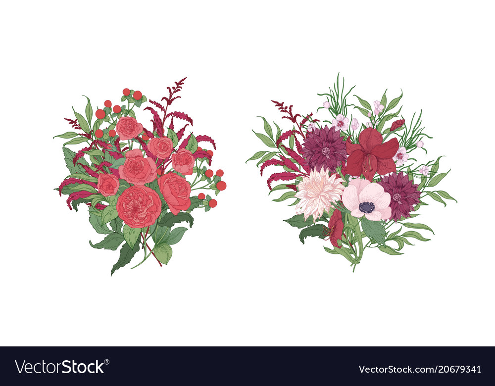 Collection of gorgeous bouquets or bunches of red Vector Image