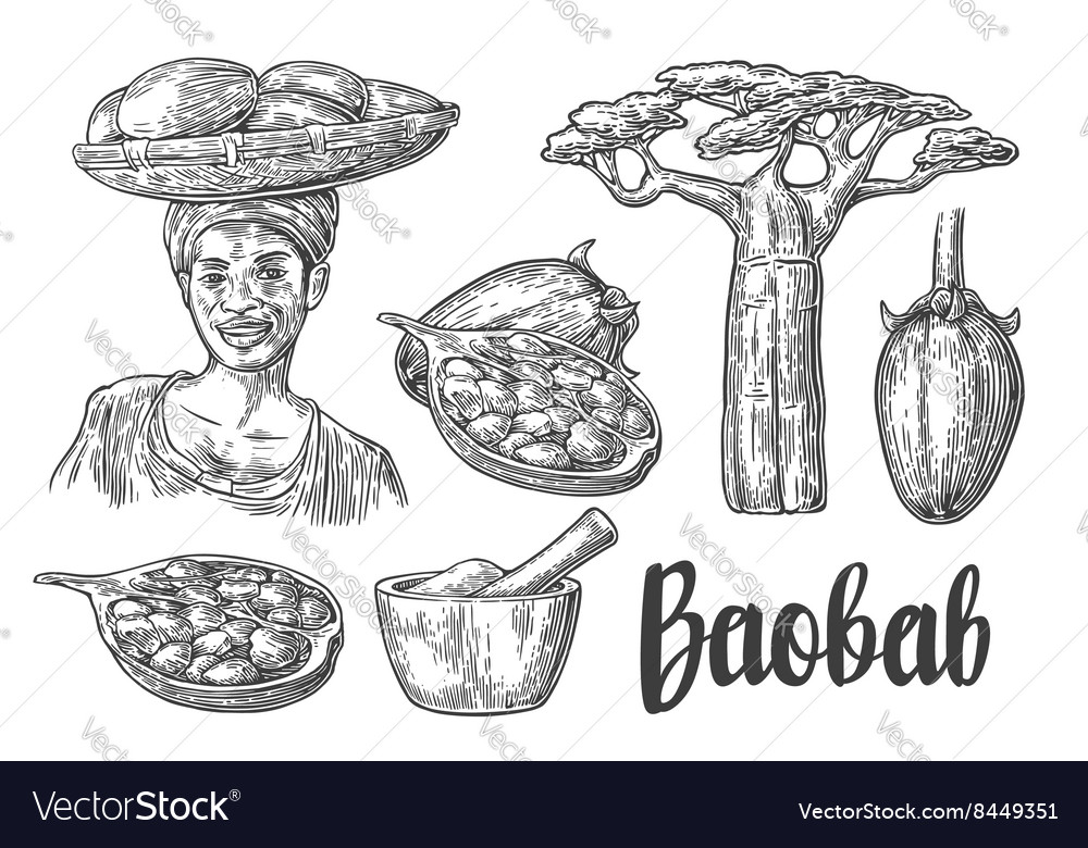 Baobab fruit tree and seeds Mortar and pestle