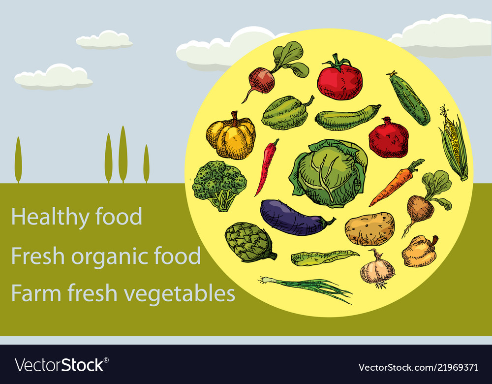 Organic fruits and vegetables food hand drawing
