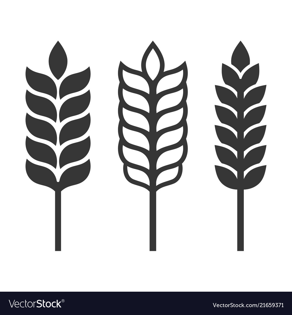Wheat ear spica icon set on white background