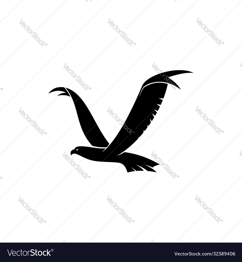 Falcon eagle or hawk bird in flight