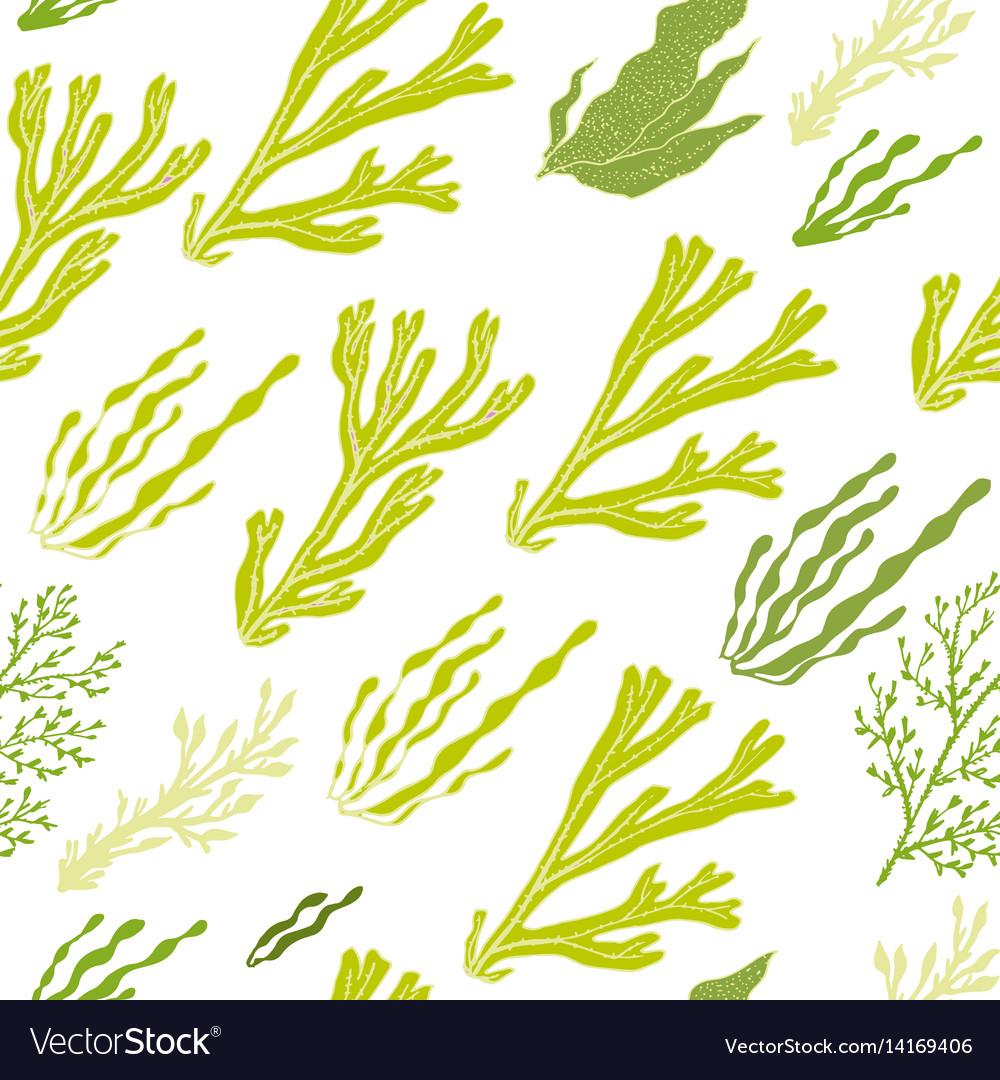 Trendy summer seaweed design