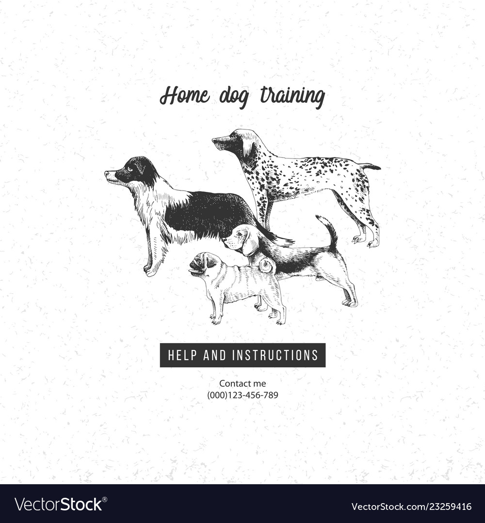 Background with hand drawn dogs for dog training