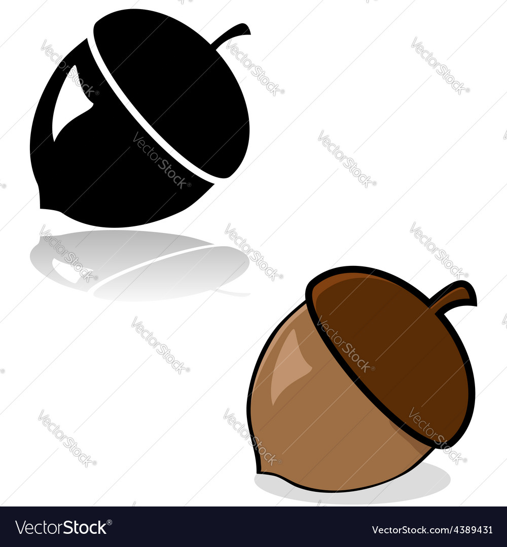Acorn drawing vector image