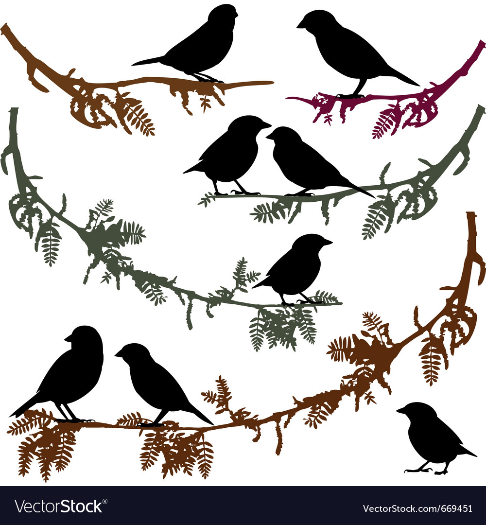 Birds on branch tree