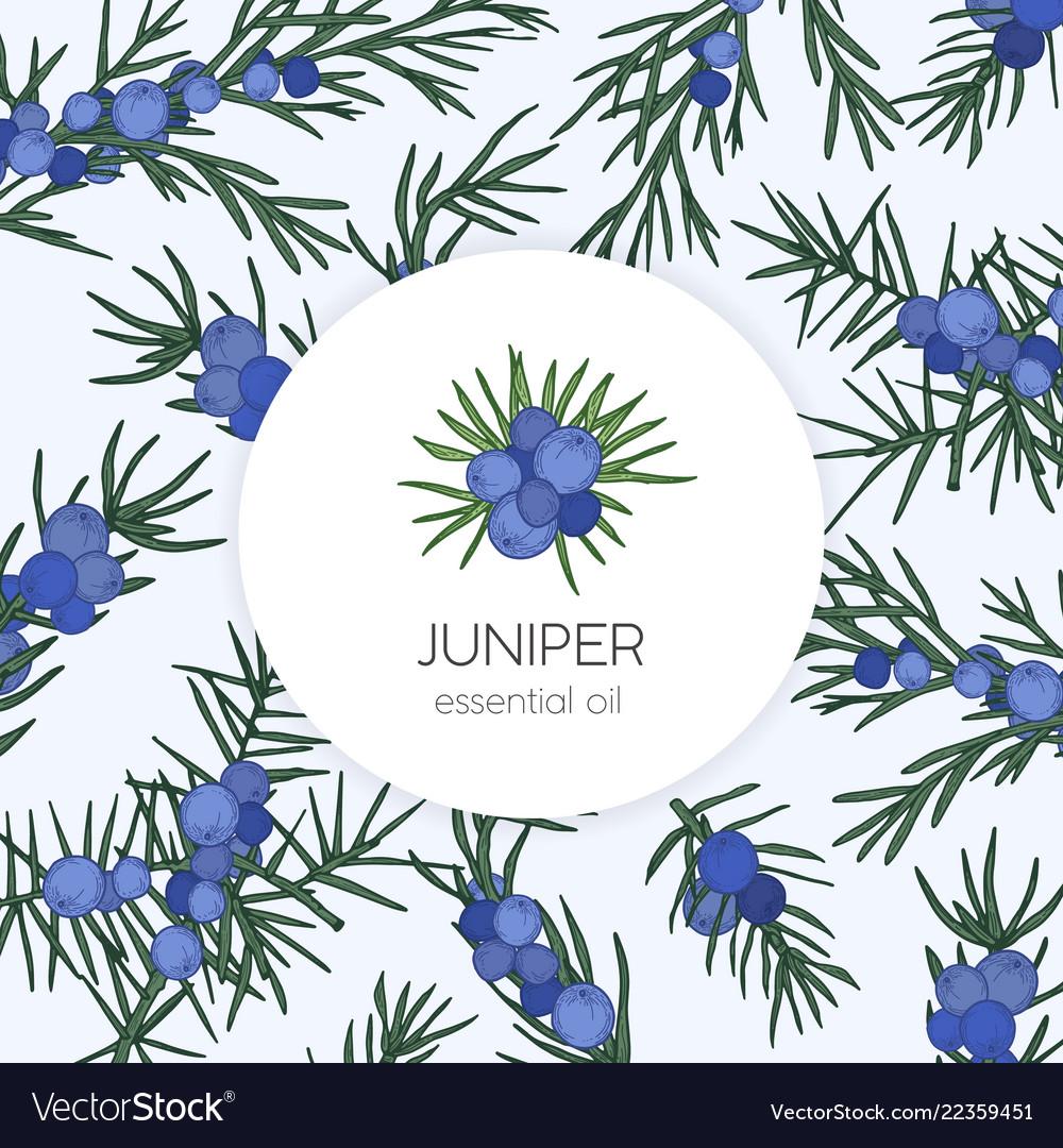 juniper essential oil label or tag template vector image