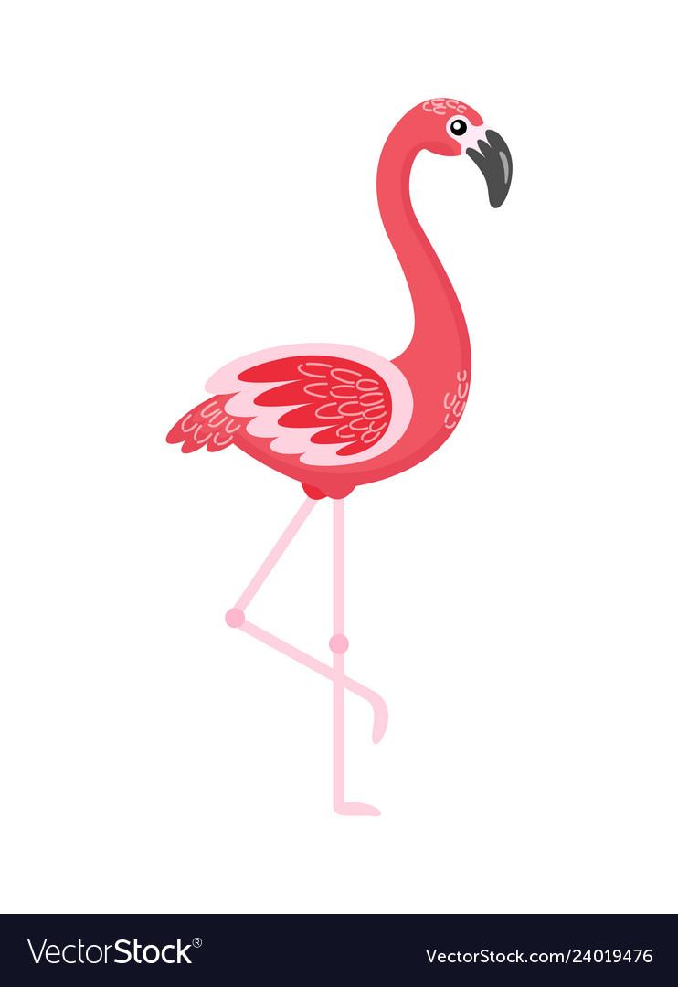 Flamingo standing with raised foot bird