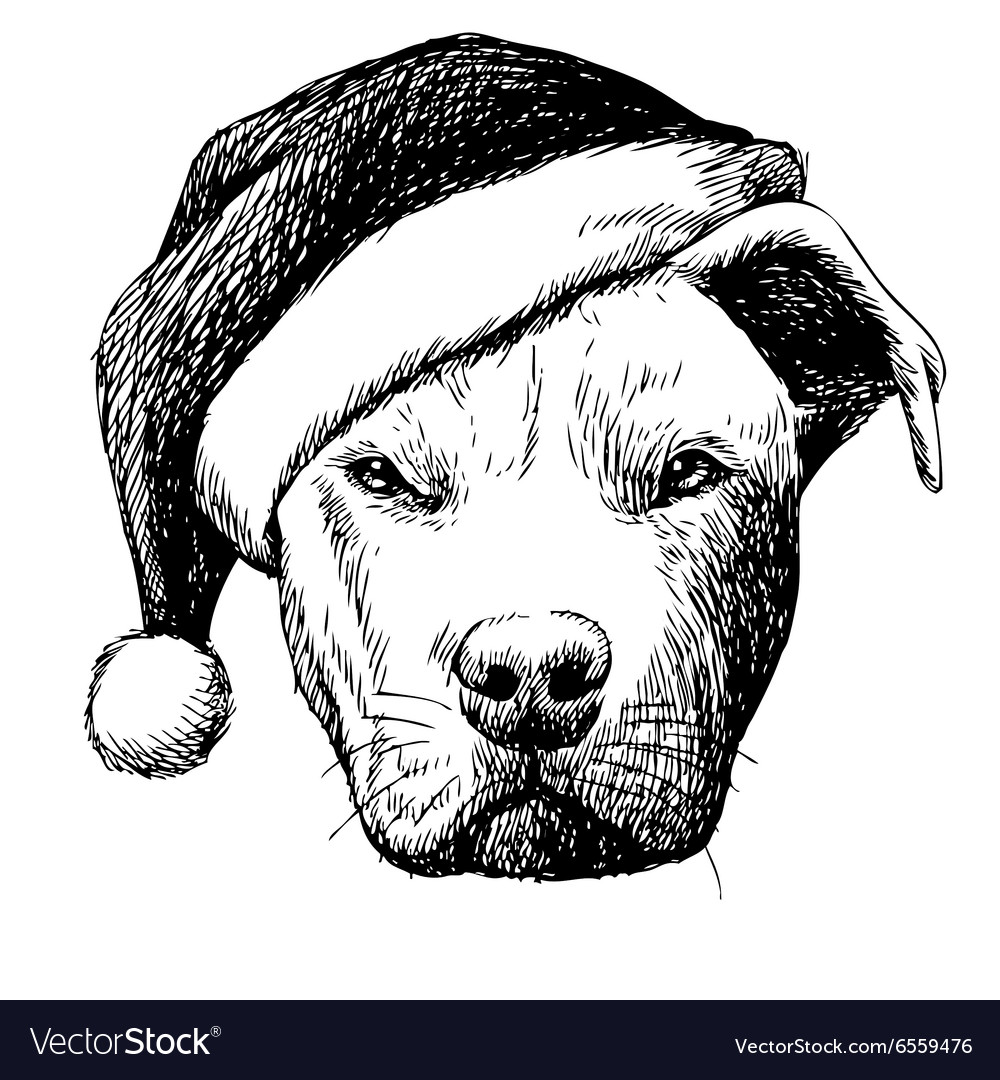 Pitbull with christmas hat vector image