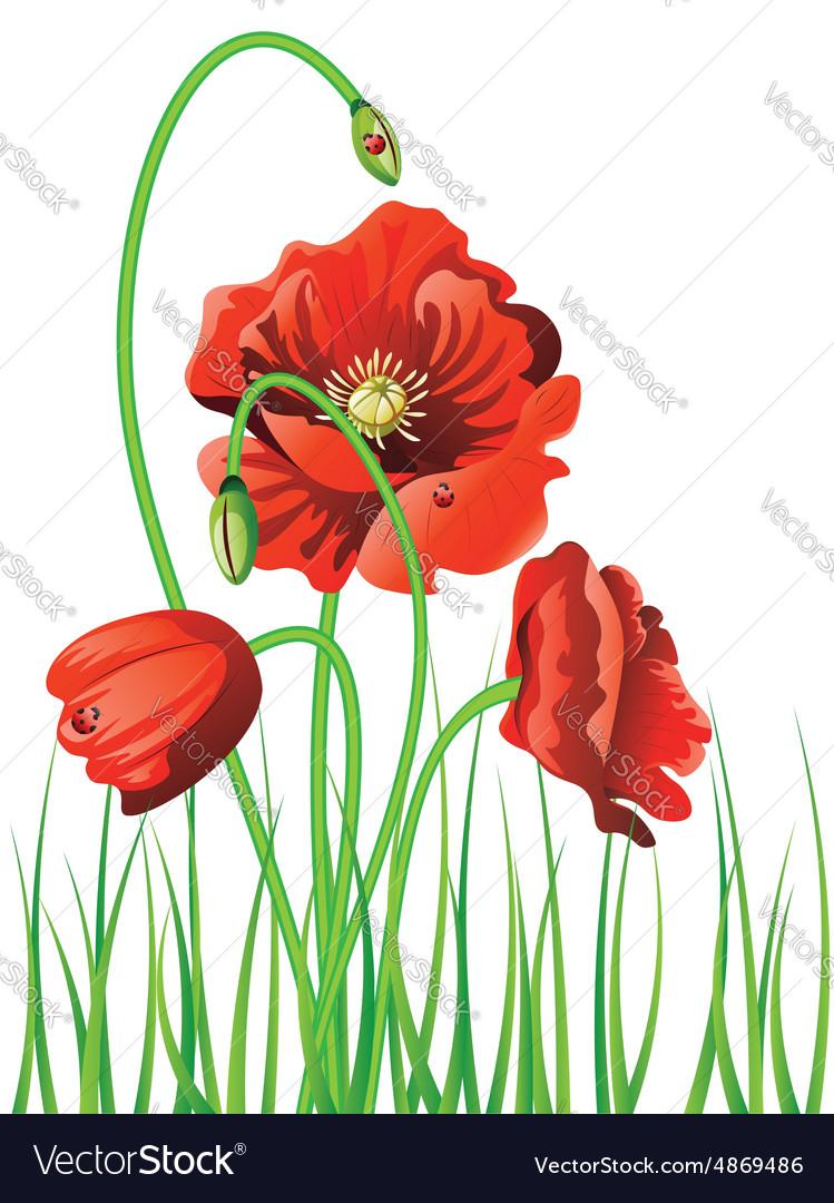 Poppy with Grass2