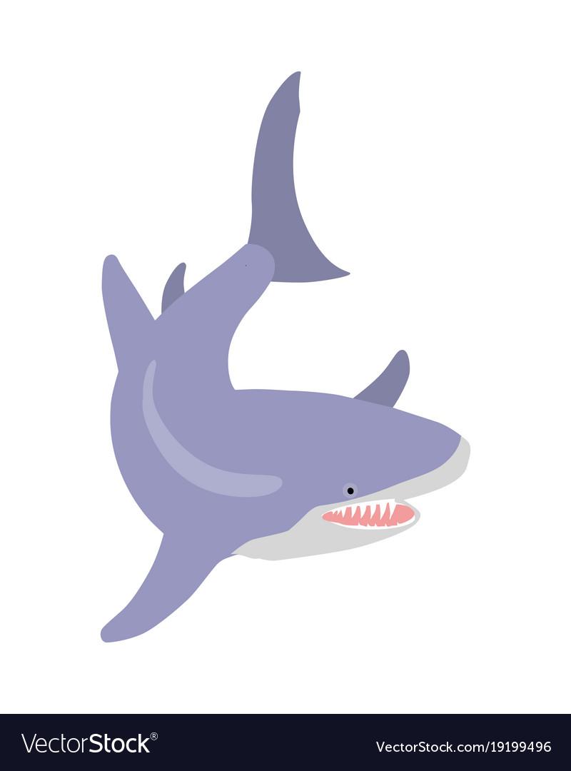 Cartoon pictures of great white sharks