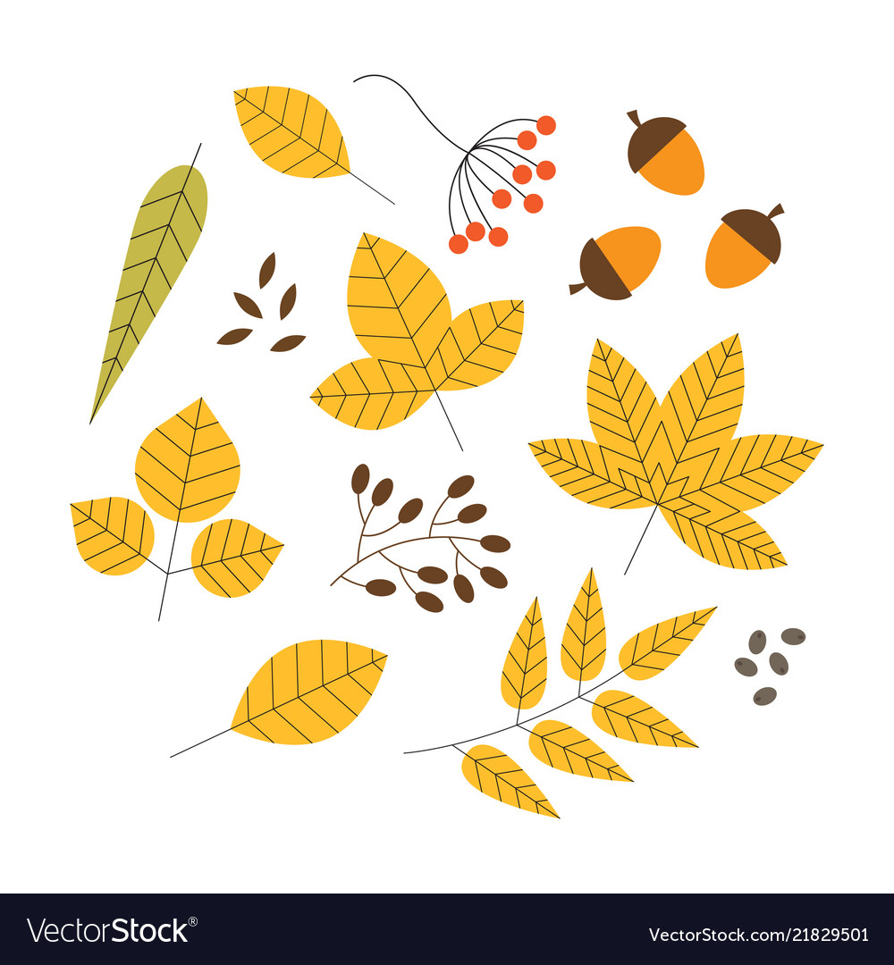 Set of colorful autumn leaves and berries