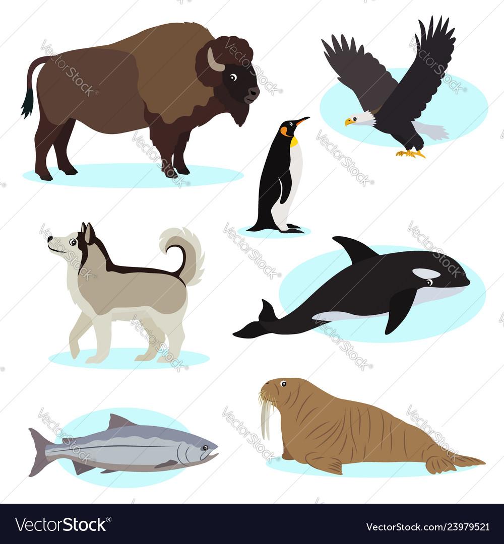Set of cute wild animals icon for design