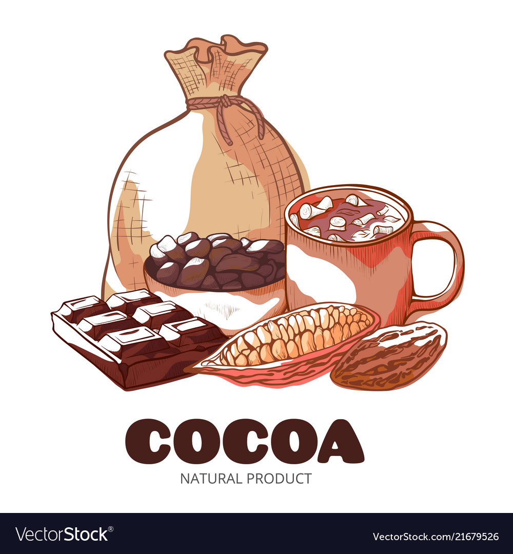 Cocoa product hand drawn banner isolated