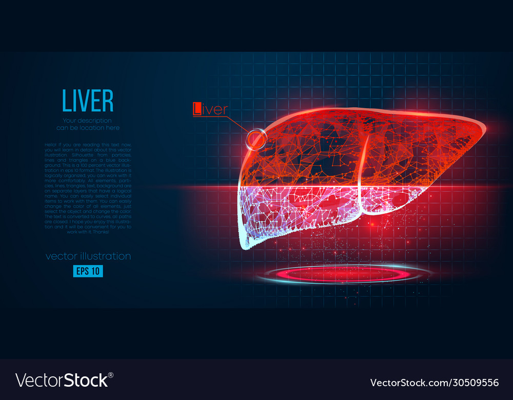 Abstract silhouette polygonal organ liver