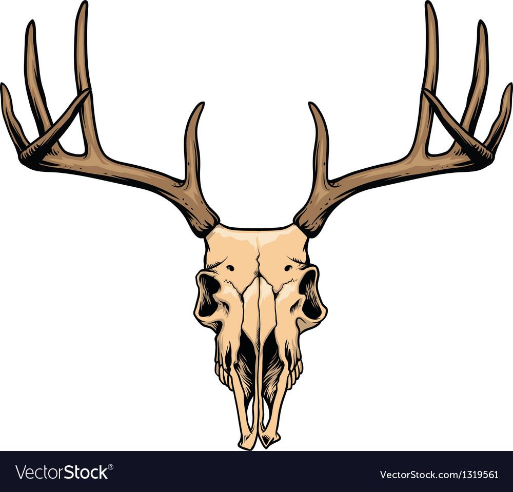 deer skull royalty free vector image vectorstock rh vectorstock com deer skull mount vector deer skull vector art free