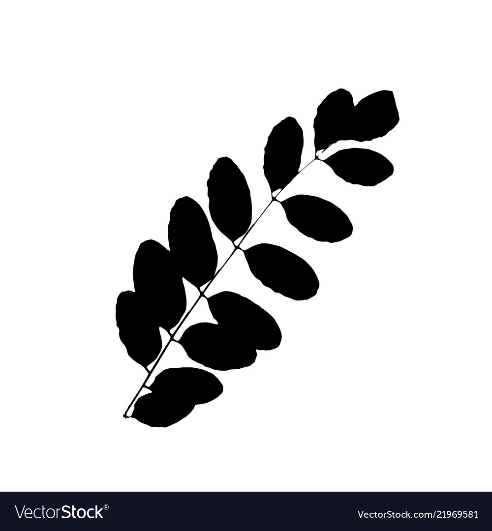 Rowan or sorb tree leave silhouette plant and