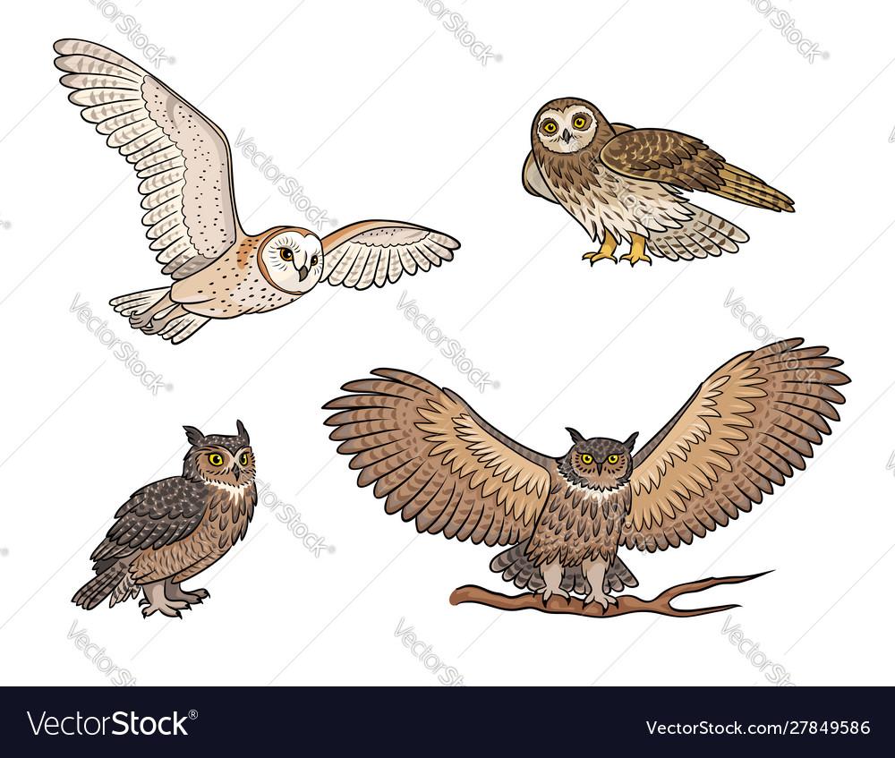 Set different owls