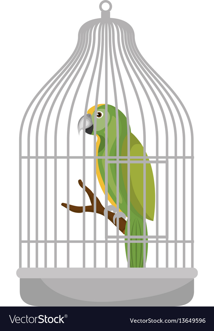 cute bird parrot in cage mascot royalty free vector image