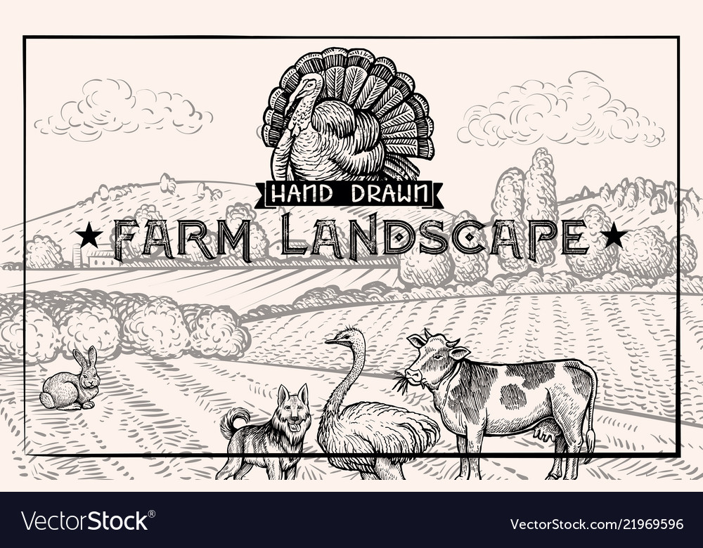 Vintage barn landscape and farm animals ostrich