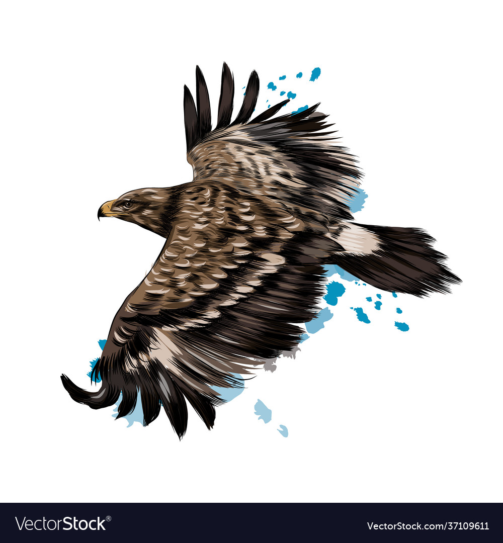 Flying steppe eagle from a splash watercolor