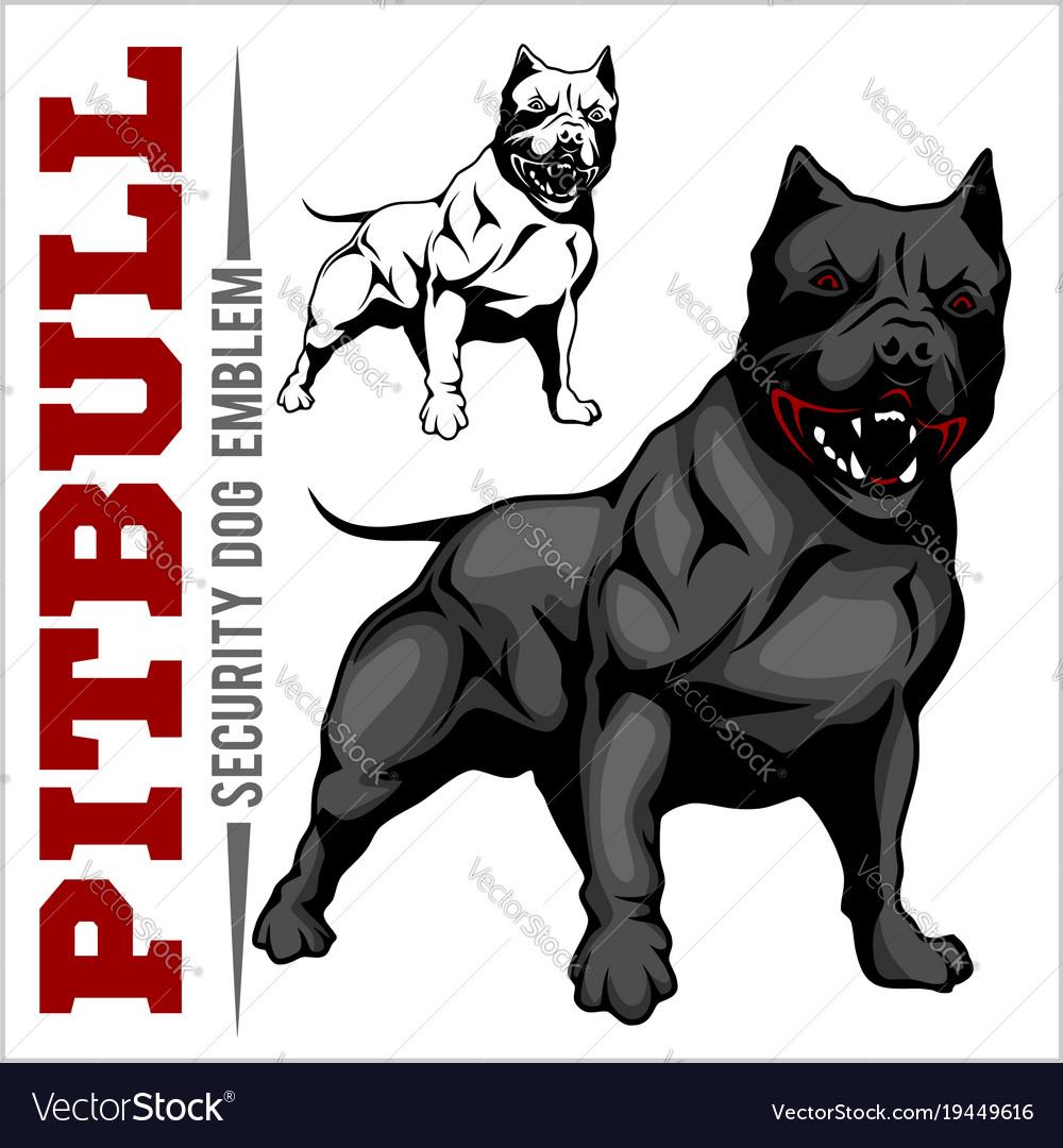 American Pit Bull Terrier Pitbull