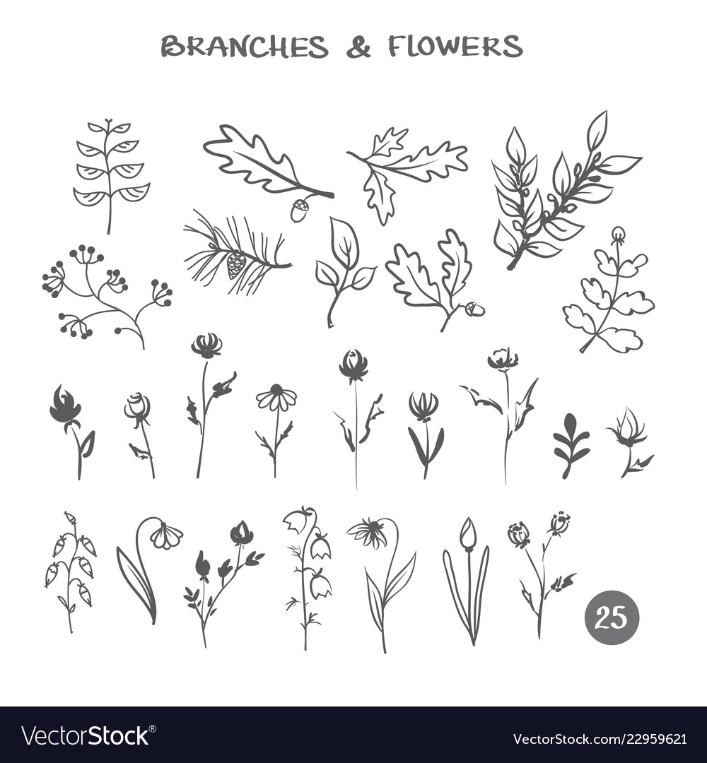 Set of branches and flowers