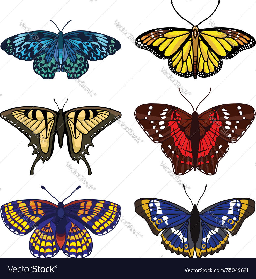 Set with butterflies isolated on white background
