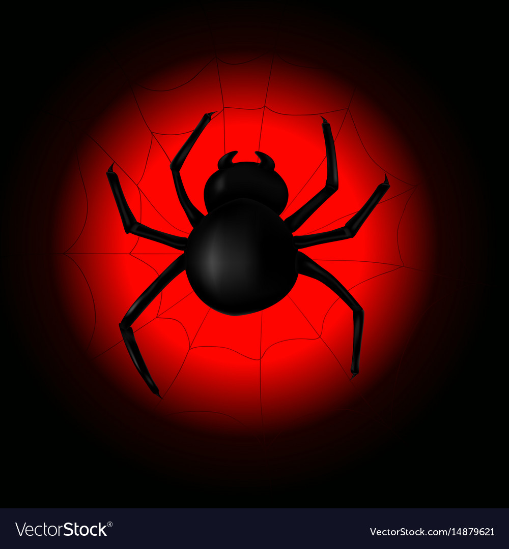 Spider with spider web on the background of the vector image