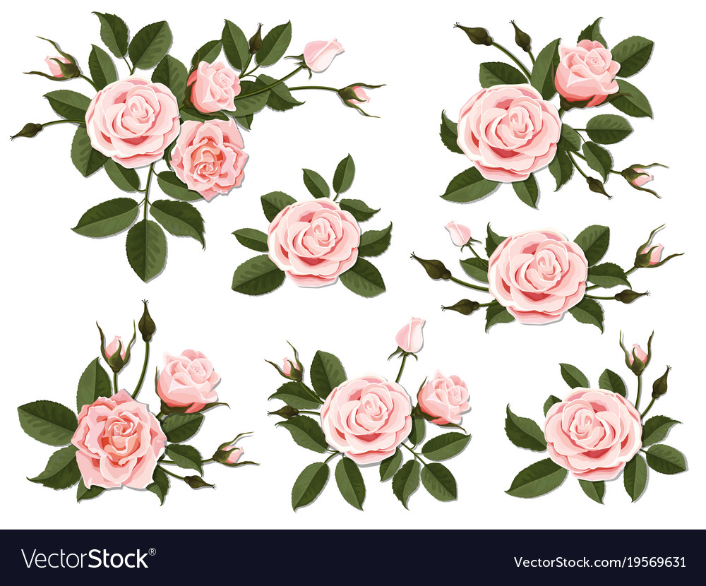 Pink rose boutonniere set