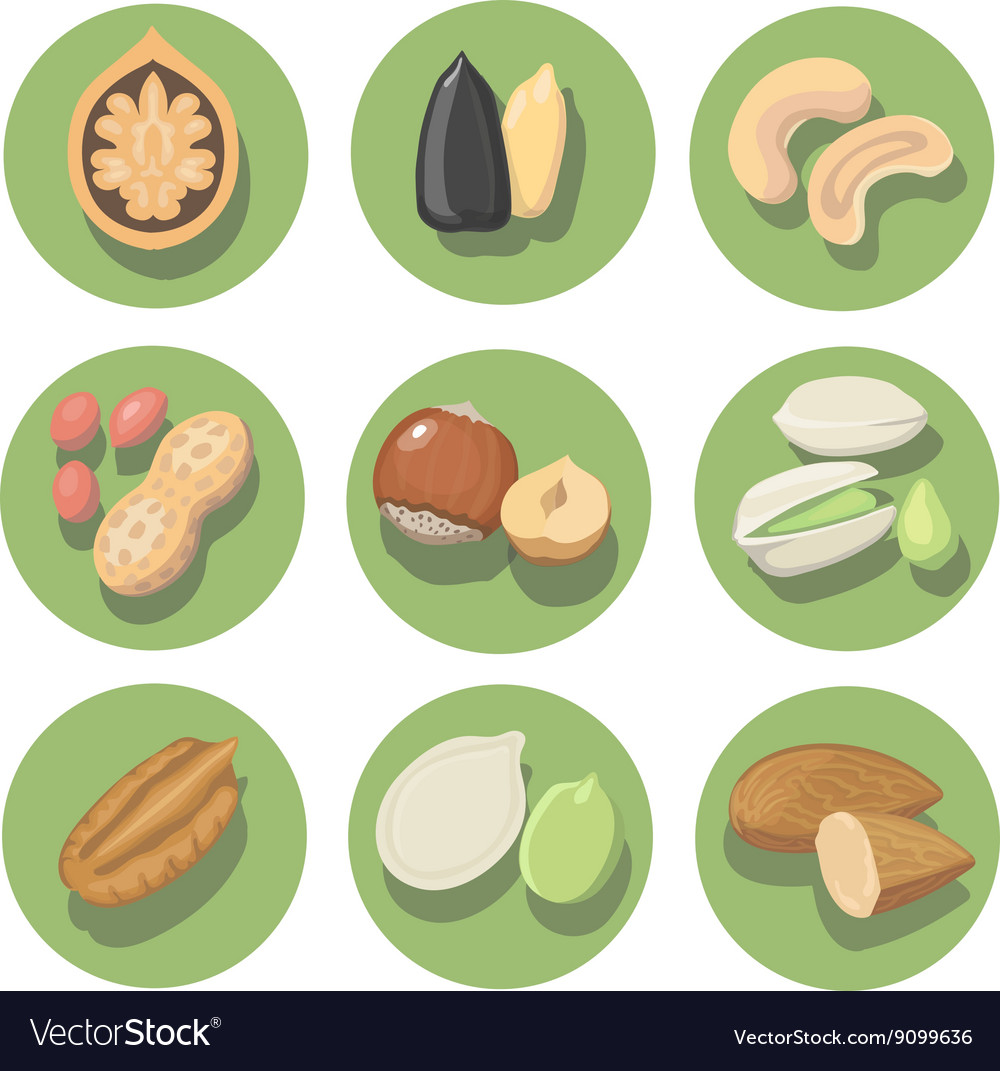 Nuts icon set peanut cashew pistachio and