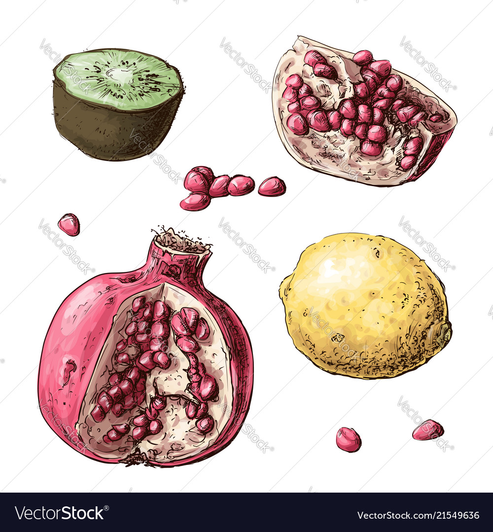 Set fruits lemon garnet kiwi
