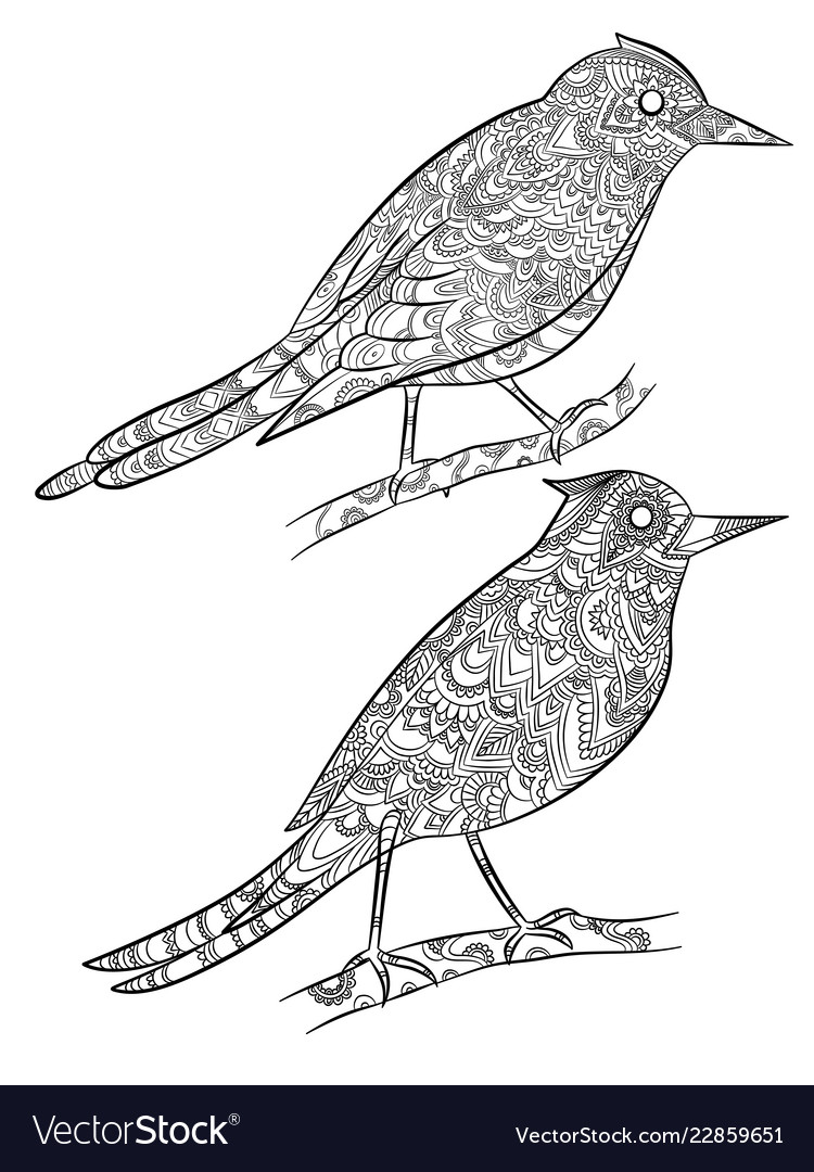 Birds coloring pages flying wild canary with Vector Image