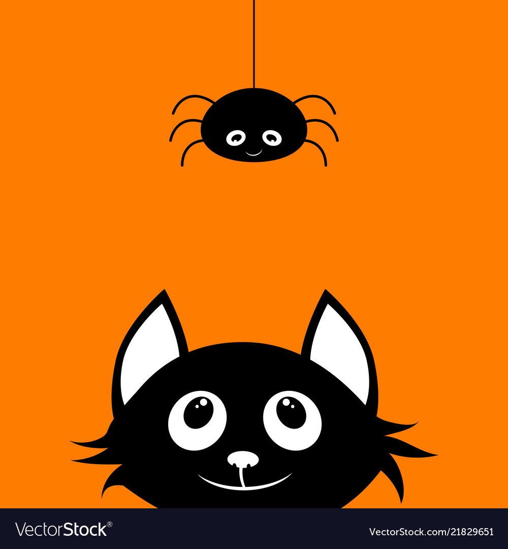 Black cat and spider