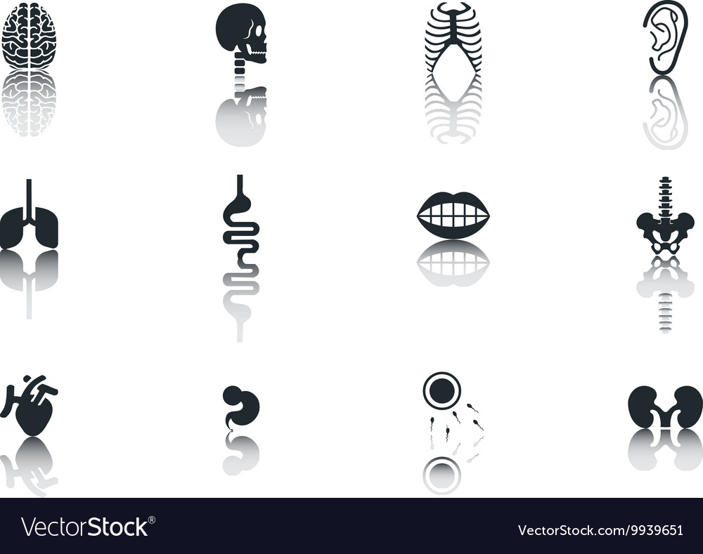 Simple Set of Organs Related Icons