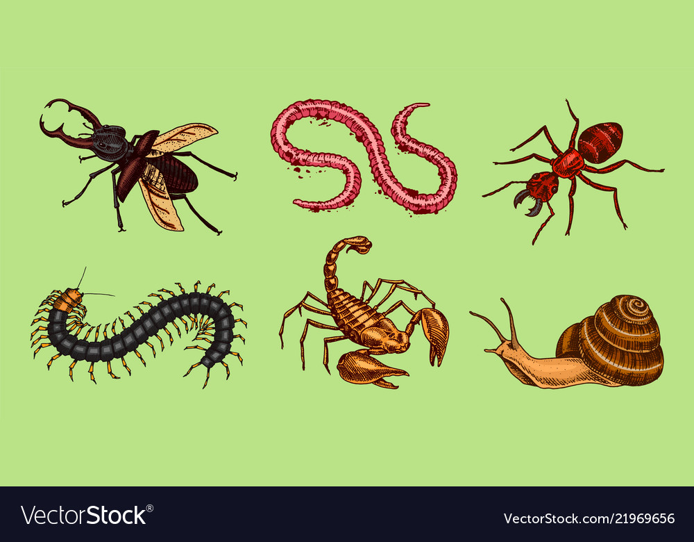 Big set insects vintage pets in house bugs vector