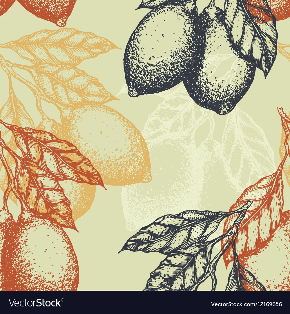 Lemons background Linear graphic Engraved citrus vector image