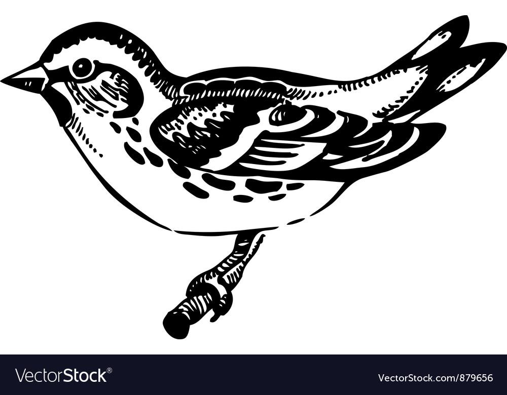 Siskin bird hand-drawn