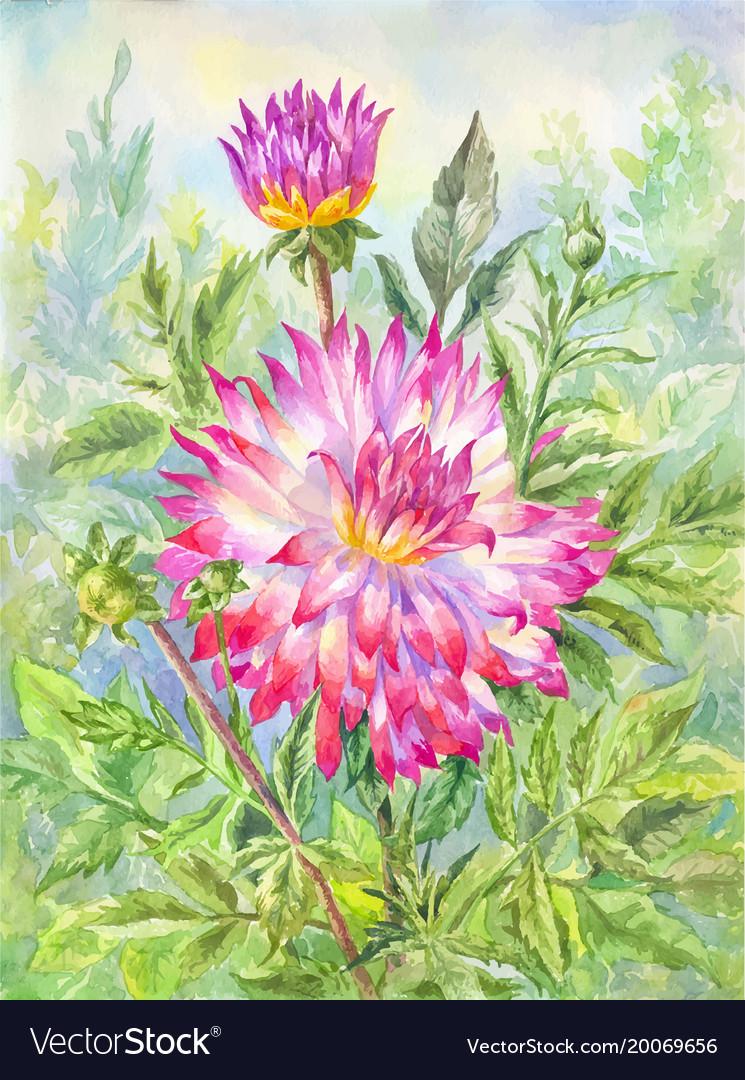 Watercolor Dahlia In Flowering Garden Summer Vector Image