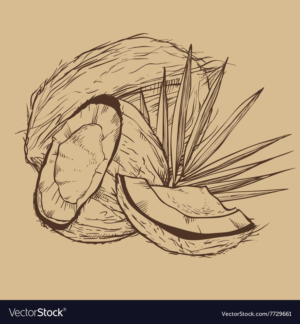 данный человек рисунок кокоса карандашом совместить фотоаппарат