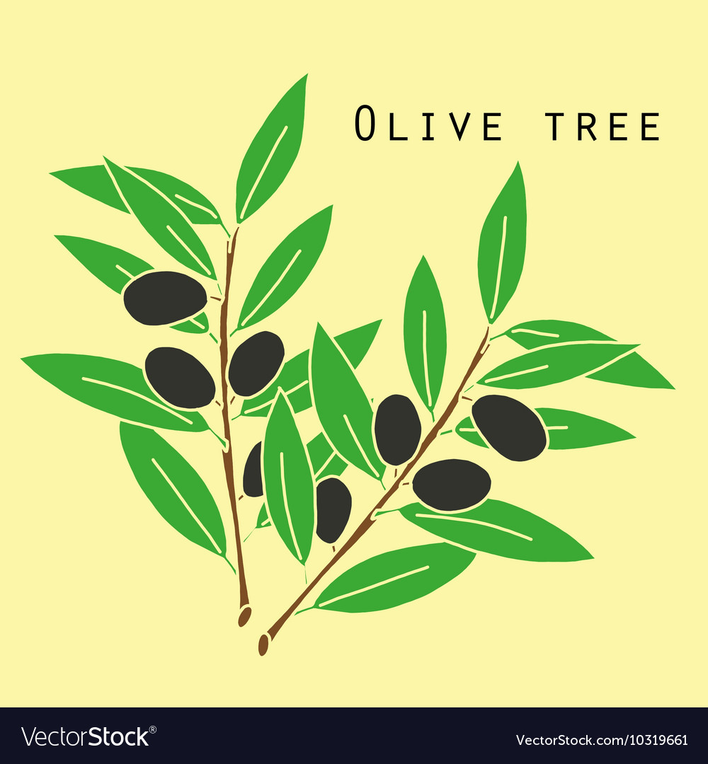 Two olives branches Royalty Free Vector Image - VectorStock