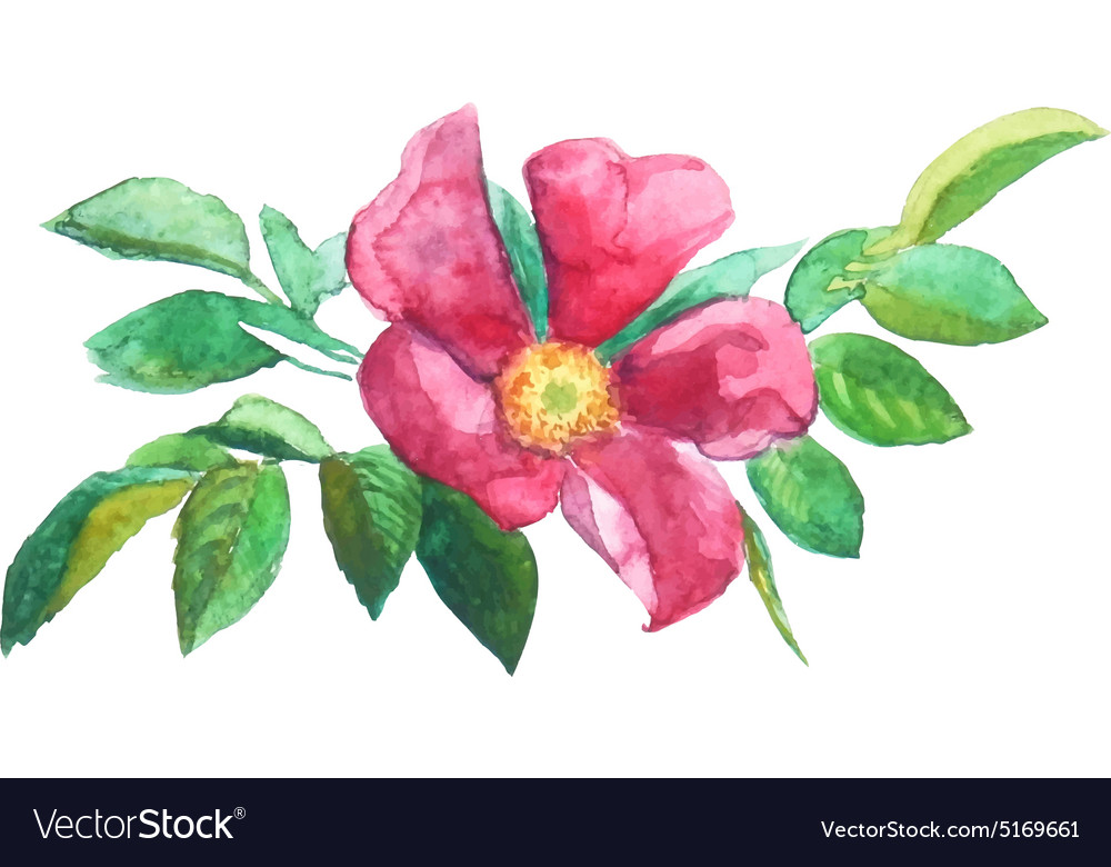Watercolor Painting Trace Red Brier Flower Vector Image