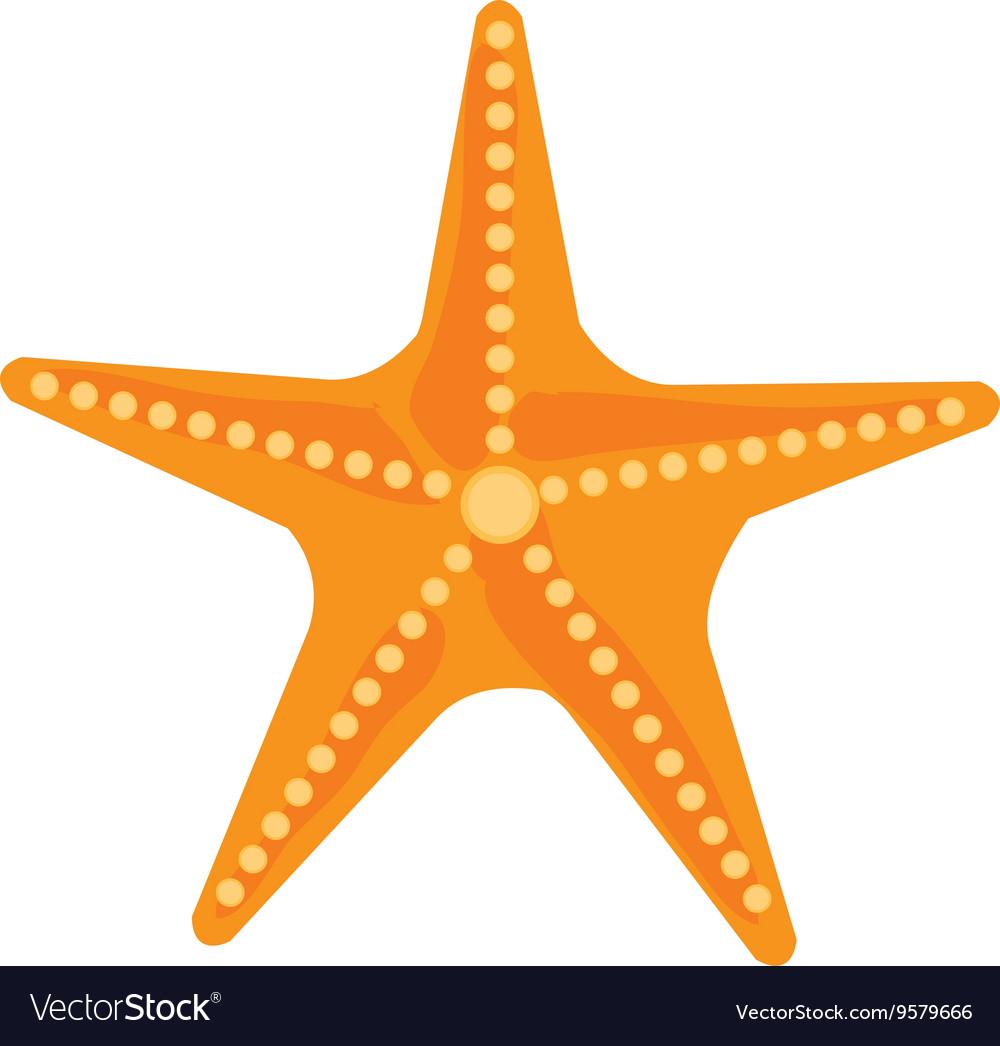 colorful ocean starfish graphic royalty free vector image rh vectorstock com starfish vector download starfish vector png
