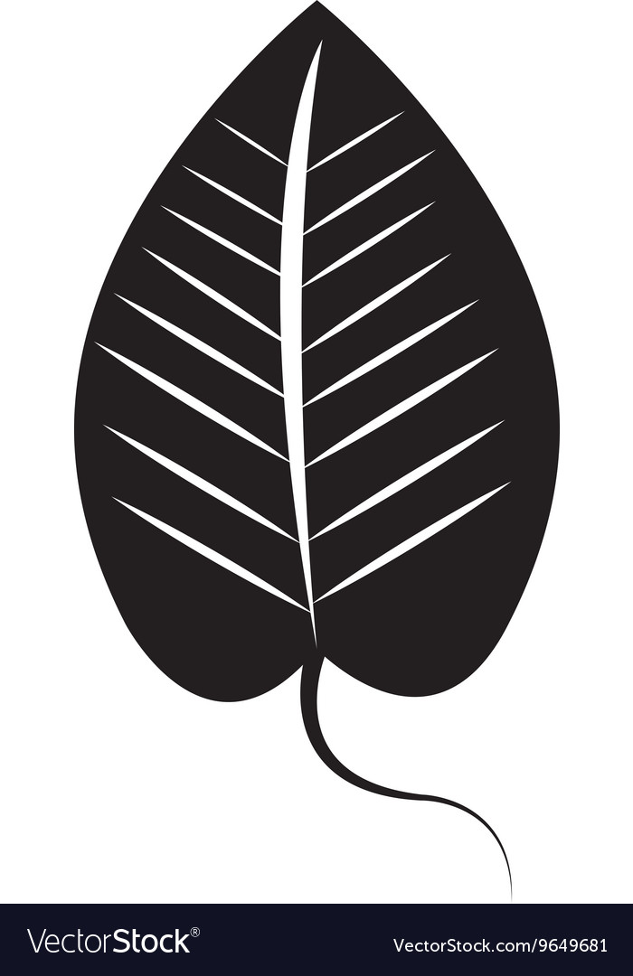 Black and white leaf icon design ecology theme