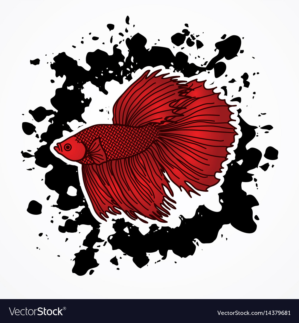 Siamese fighting fish graphic Royalty Free Vector Image