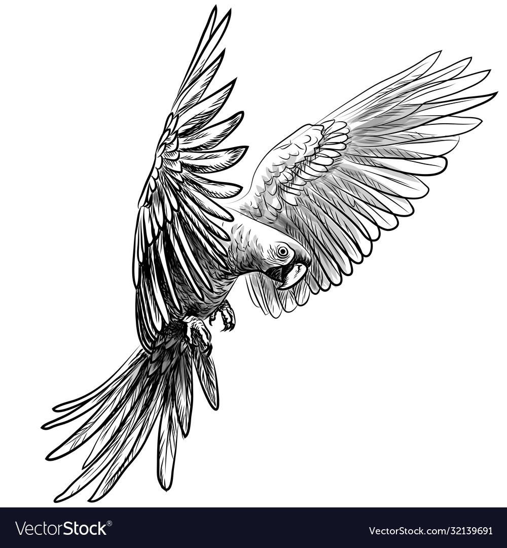 Macaw parrot in flight