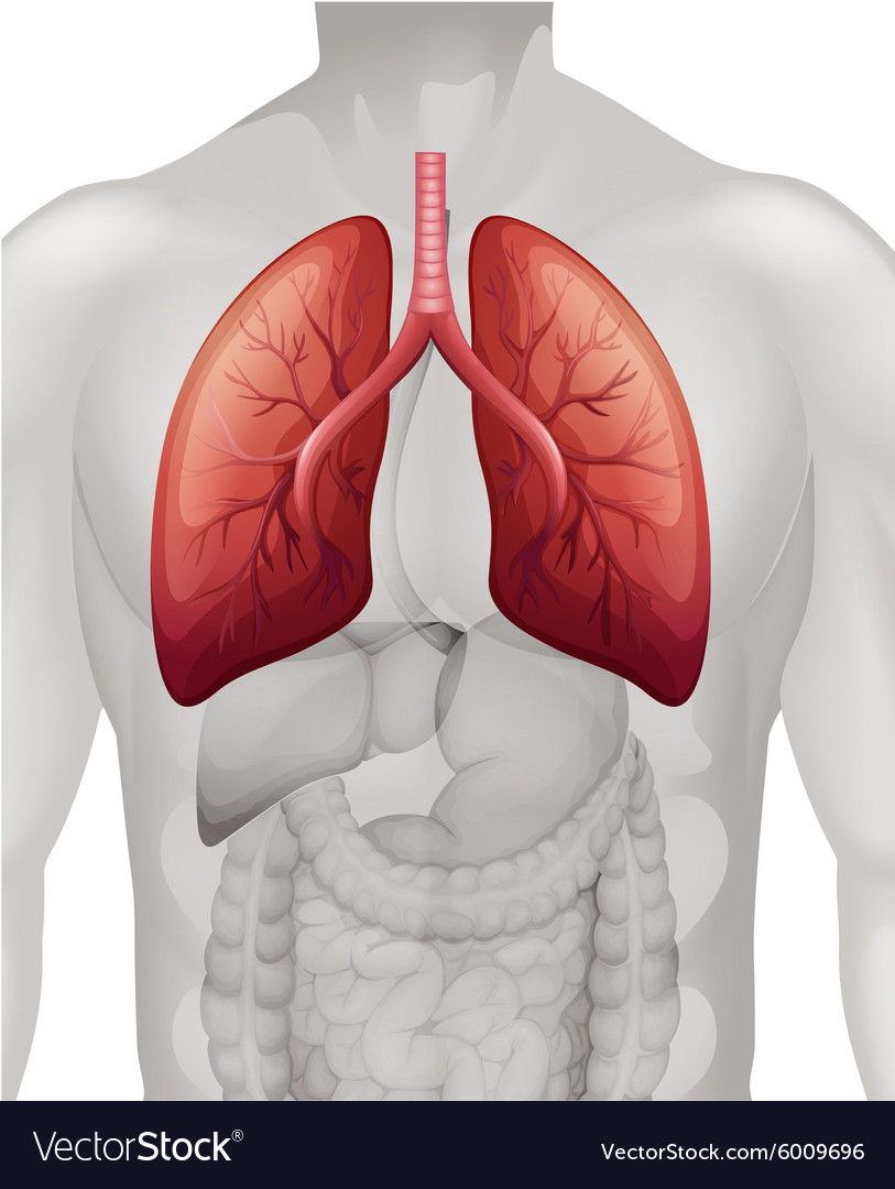 Lung cancer diagram in human Royalty Free Vector Image